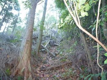 P1010029山頂手前のヒノキ林境尾根.JPG