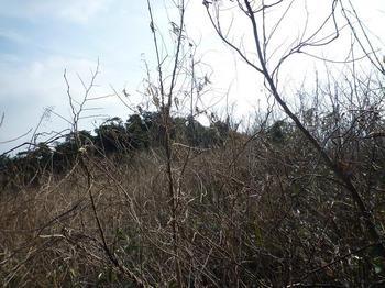 P1010170馬の背山頂手前の荒地.JPG