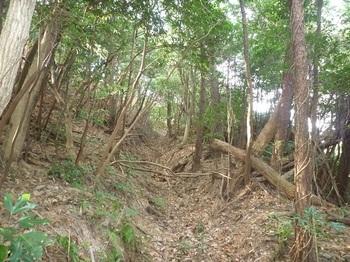 P1010290掘割り状の山道.JPG