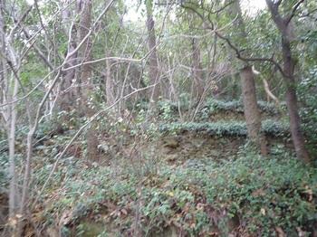 P1010338段状の石垣.JPG
