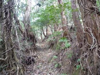 P1010430堀割状の登山道.JPG