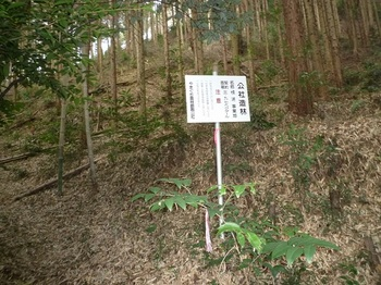 P1010502公社造林看板.JPG