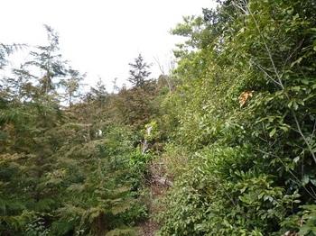 P1010521ヤブの植林境.JPG