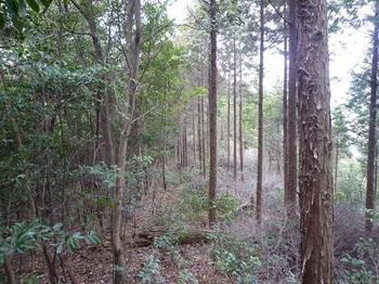 P1010529植林境尾根.JPG