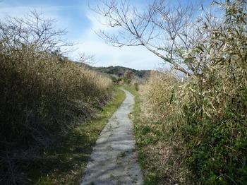 P1010621刎島方面へのコンクリート道.JPG