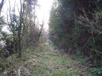 P1010629荒れた林道.JPG