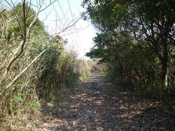 P1010645砂州への林道.JPG