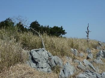 P1010817目印の岩と木.JPG