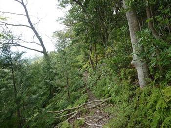 P1010981植林境のそま道.JPG