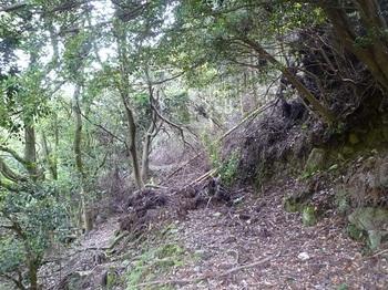 P1020131荒れた林道.JPG
