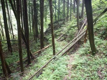 P1020281倒木の多い下山道.JPG