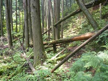 P1020282倒木の多い下山道.JPG