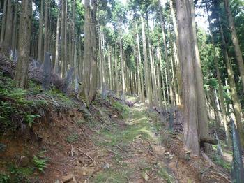 P1020658植林作業道.JPG
