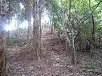 P1020661植林境尾根.JPG
