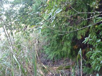 P1020695植林境ヤブ.JPG
