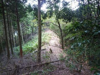 P1020714植林境尾根.JPG