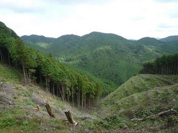 P1020859伐採地からの展望.JPG