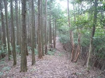 P1020874植林境尾根.JPG
