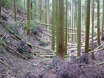 P1020885杉植林谷.JPG