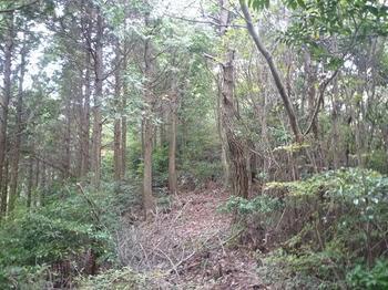 P1030002ヒノキ植林境尾根.JPG