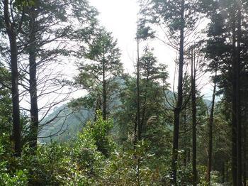 P1030017樹間に山鳥ヶ浴頭.JPG