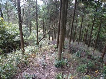P1030018枝打ちされた植林境.JPG