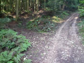 P1030051林道分岐(左へ).JPG