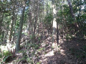 P1030068植林境尾根.JPG