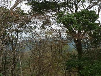 P1030085徳仙山頂から樹間越しに三ツ頭方面.JPG