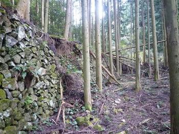 P1030116棚田跡石垣(3m).JPG