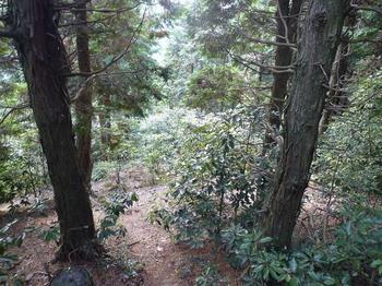P1030163低木が茂るヒノキ植林尾根.JPG