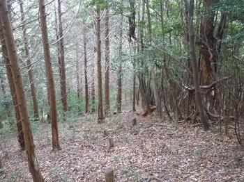 P1030174ヒノキ植林境尾根.JPG