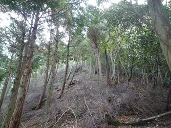 P1030198ヒノキ植林境尾根(枝打ち).JPG