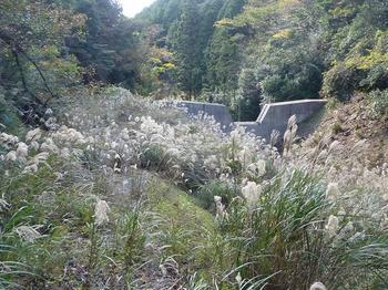 P1030213林道から第一堰堤.JPG