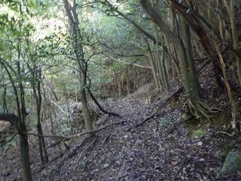 P1030228山道(左岸).JPG