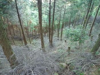 P1030235江の峠側のヒノキ谷.JPG