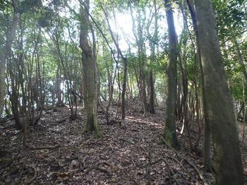 P1030258山頂手前雑木林.JPG