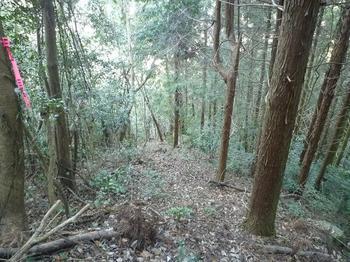 P1030709植林境尾根.JPG
