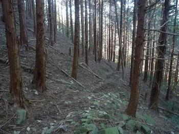 P1030712ヒノキ林幅広山道.JPG