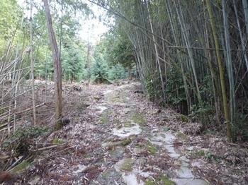 P1030892スギ谷へ向かう林道.JPG