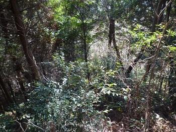P1040144ヒノキ林境ヤブ.JPG