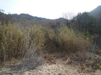 P1040179河原の先に林道続く.JPG