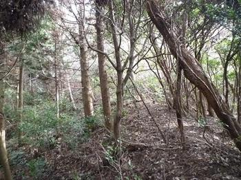 P1040369植林境.JPG