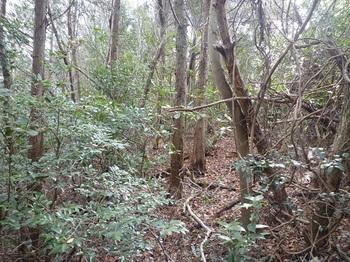 P1040382雑木混じりの荒れたヒノキ林境.JPG