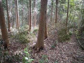 P1040386ヒノキ植林帯に出る.JPG