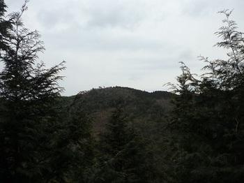 P1040393ヒノキ植林帯(4m)に出会う・576mピーク方面.JPG