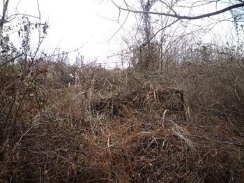 P1040405ヤブの旧牧場境.JPG