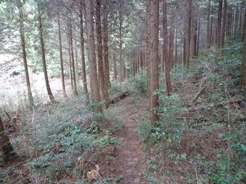 P1040415ヒノキ林沿いの山道.JPG