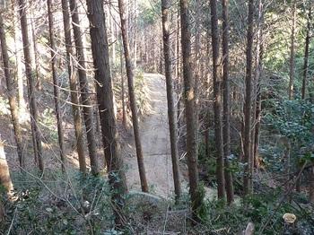 P1040441下に林道が見える.JPG