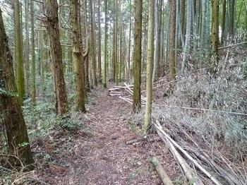 P1040524植林帯.JPG